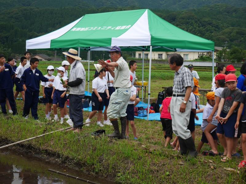 高隈 コミュニティの田んぼで「お田植え」開催5