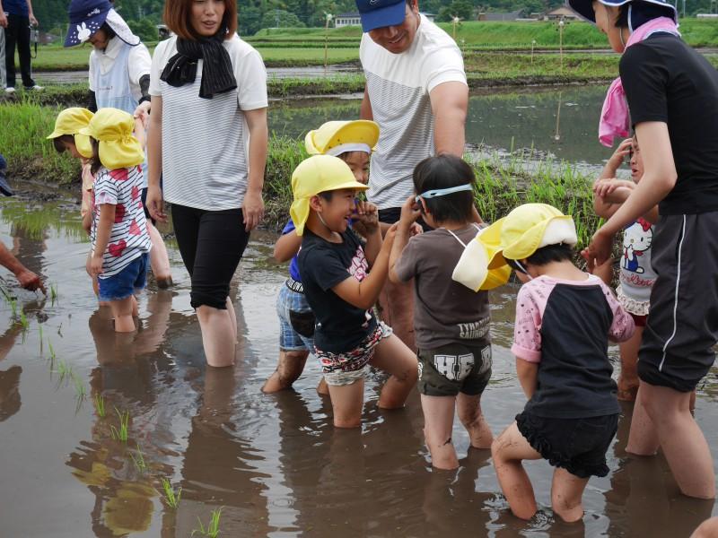高隈 コミュニティの田んぼで「お田植え」開催1