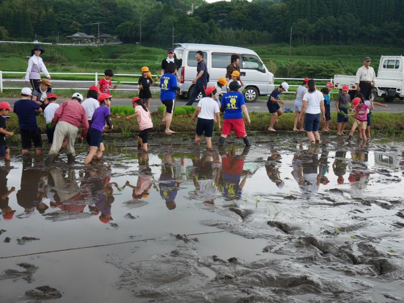 高隈 コミュニティの田んぼで「お田植え」開催2