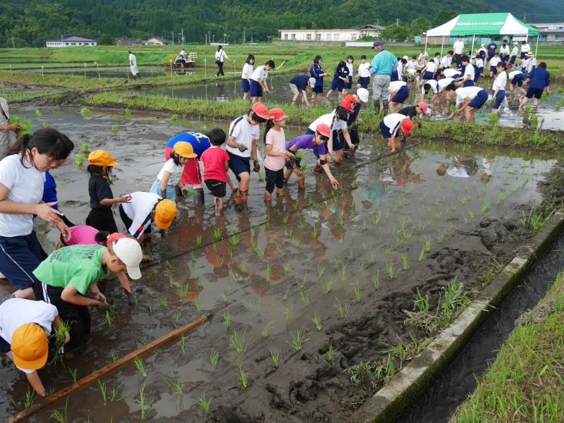 高隈 コミュニティの田んぼで「お田植え」開催3