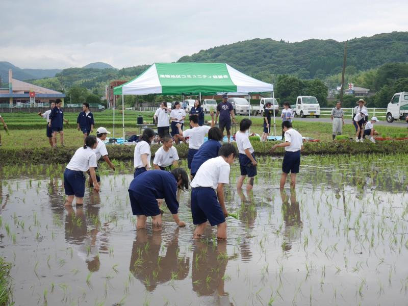 高隈 コミュニティの田んぼで「お田植え」開催4